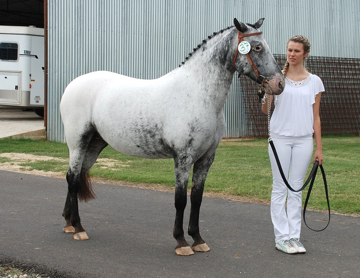 pin by erin long on color appaloosa pinterest colors
