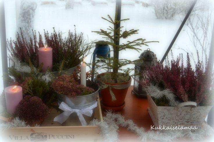 Sammal- ja kynttiläasetelmia - Moss and candle arrangements