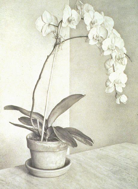Claudio Bravo. Orchid