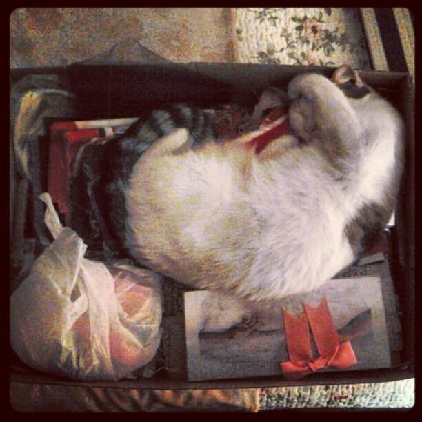 #cat #gata en #caja #dormir #sleeping