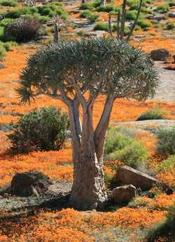 Spring Flower Route, Namaqualand, South Africa