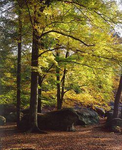 Gilles Adnot.(photo) paysage en forêt de Fonainebleau