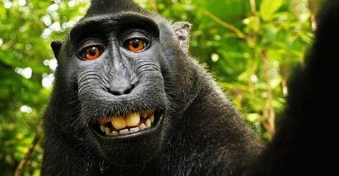 """Il """"teorema delle scimmie infinite"""" afferma che una scimmia che prema a caso i tasti di una tastiera per un tempo infinitamente lungo quasi ..."""