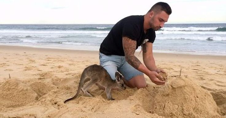 Witness this guy and his baby kangaroo BFF do everything together