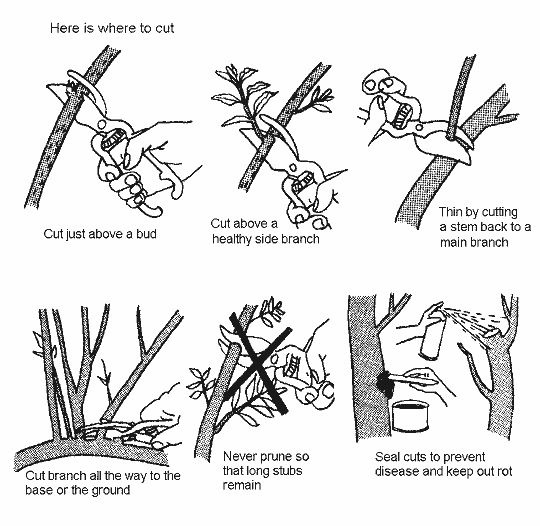 74 best tree - shaping - pruning