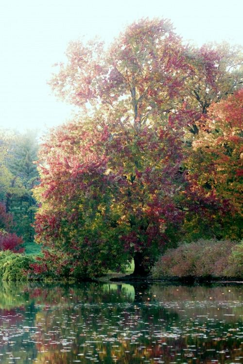 Monet's Tree. If I could live in a painting it would be this one. I would be perfectly happy spending the rest of my life by that tree