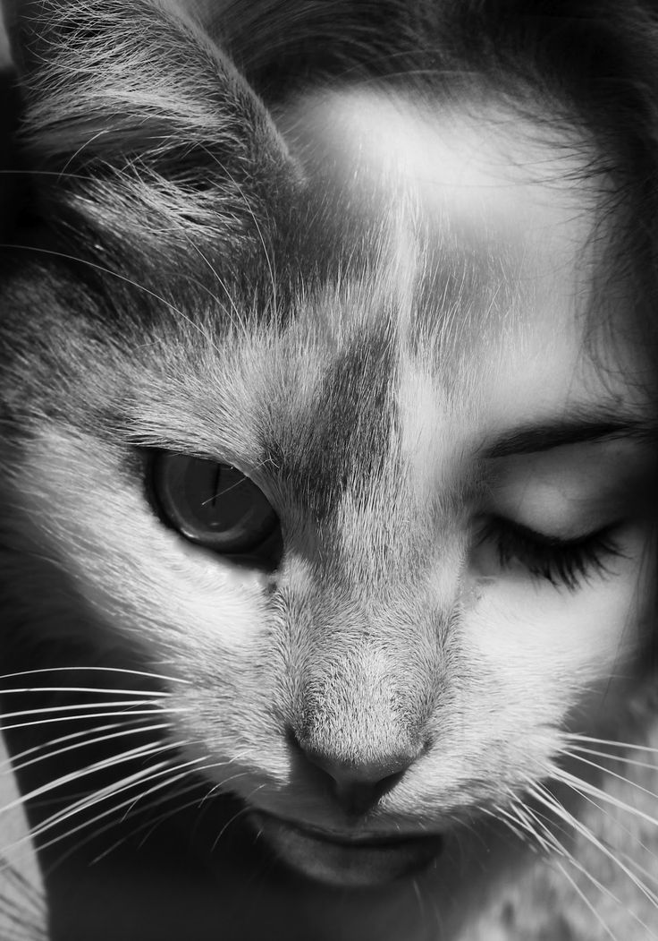 "Photo inspired by Wanda Wulz's photo ""Io + gatto"". ☀"