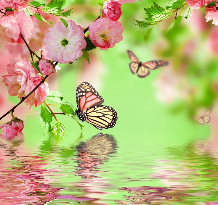 273 Best Butterfly Images On Pinterest