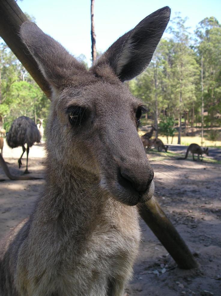 Whats up skippy, Sydney, Oz