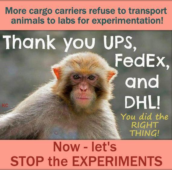 help stop animal cruelty pdf