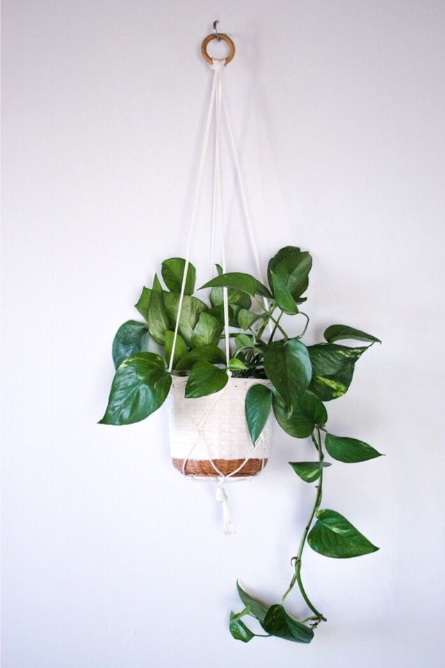 Easy plant hanger DIY You'll need a ring of some sort and four strands of rope twice the length as you want your plant hanger to become. Fold the ropes on the middle and apply to the ring as the picture's showing. Gather the rope in four pairs. Tie a knot