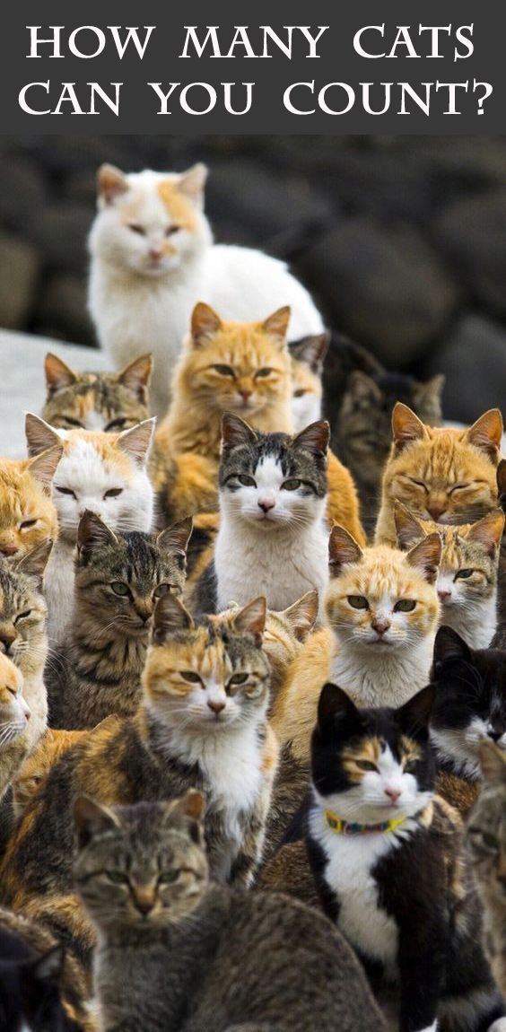 How many cats can you count? Comment below with your