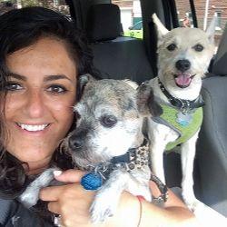 Mejores 37 imgenes de dog grooming in brooklyn ny en pinterest diamond collar dog grooming dyker heightsbrooklyn nyc solutioingenieria Images