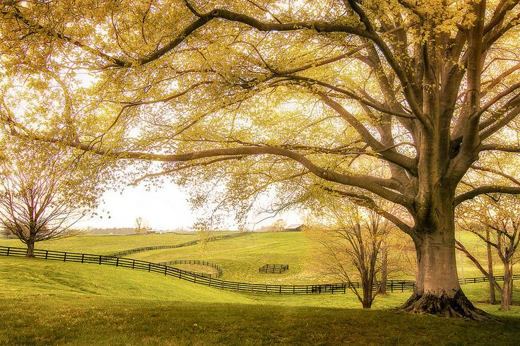 Kentucky by Michael T on 500px