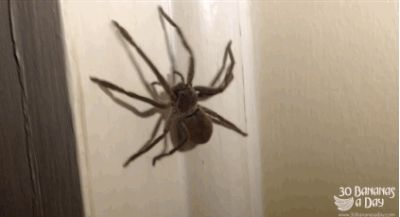 An Australian YouTuber says we have nothing to fear but fear itself. | A Beginner's Guide To Removing A Spider From Your Bedroom