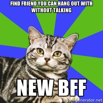 bf0f40b27088cd02c7442fa5afe905cf introvert cat find friends the 25 best introvert cat ideas on pinterest anxiety cat meme