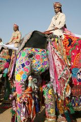 Guide to the Jaipur Elephant Festival