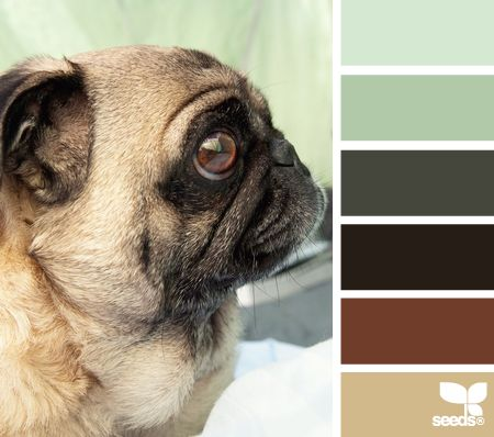 Pug palette