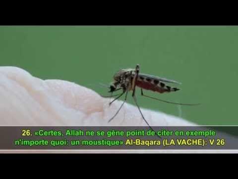 les miracles du coran prouvé scientifiquement en français  - YouTube