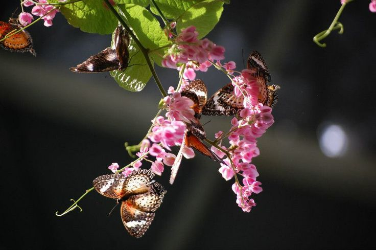 Butterfly farm in Penang,Malaysia