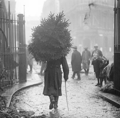 U.K. Taking the Tree home, Chelsea, London c.1915