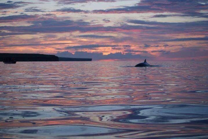 #Minke #Whales on Killala Bay last week just across the bay from #Enniscrone. What a sight!