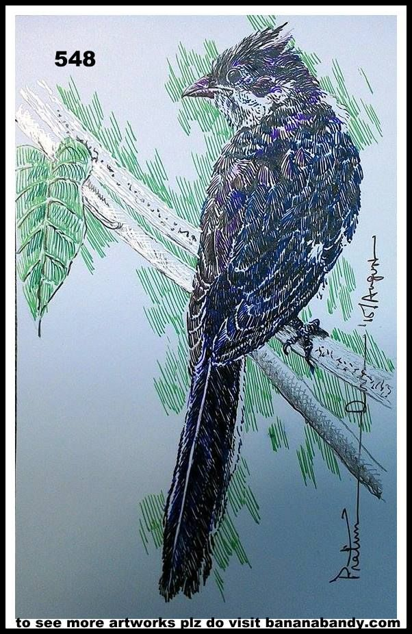 PAKHI DEKHUN PAKHI CHINUN # 526/548(Observe the Bird and recognize)..JACOBIN CUCKOO ... COL. GELPENS... 4*9 INCH...2015... [FROM PHOTOGRPAH OF MR. SUBRATA MUKHERJEE] ... The Jacobin cuckoo, pied cuckoo, or pied crested cuckoo (Clamator jacobinus) is a member of the cuckoo order of birds that is found in Africa and Asia. It is partially migratory and in India, it has been considered a harbinger of the monsoon rains due to the timing of its arrival. It has been associated with a bird in Indian…