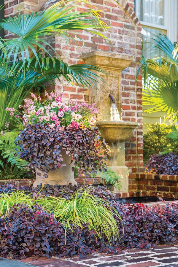 294 best plants for north central florida images on pinterest