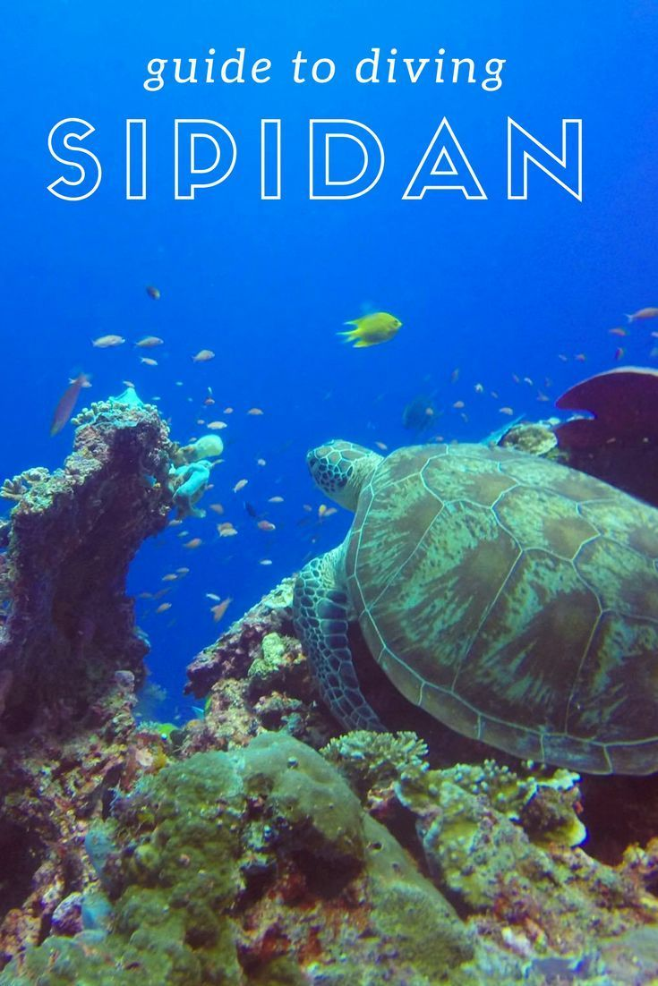 Guide to Diving Sipidan and Mabul Island in Borneo. best diving places around the world and best diving spots in asia! cheap diving locations. turtles, sharks, barracuda and jack fish. deep diving. scuba diving destinations in malaysia. Scuba diving bucket list.  ☆☆ Travel Guide / Ideas by #Inspiredbymaps ☆☆