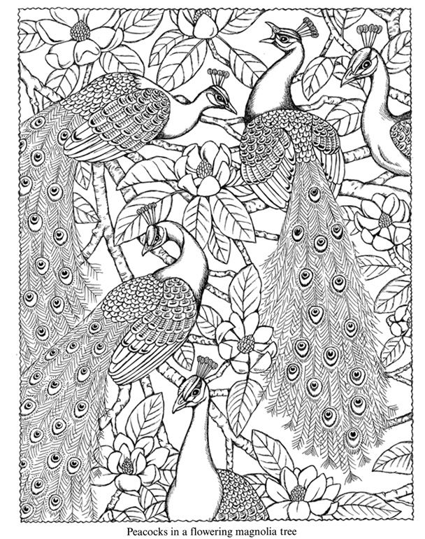 peacocks in a magnolia tree coloring page from dover publications