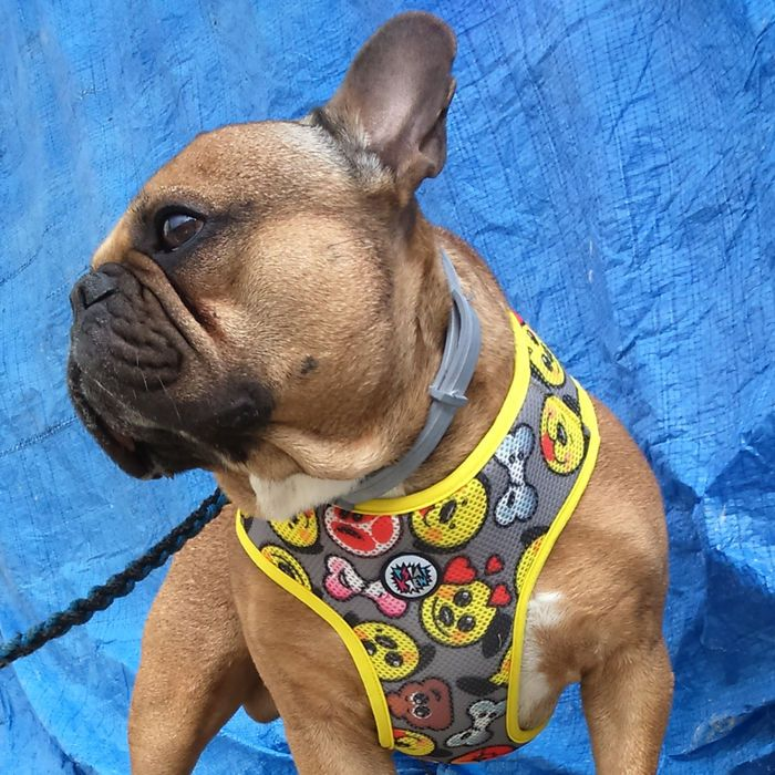 Dog Harness, Always Feeling Cool, Super Soft Psiakrew Dog Emoticon   Dog Harness   Psiakrew, dog t-shirts, BULL TERRIER, AMSTAFF, PIT BULL,STICKERS with dogs