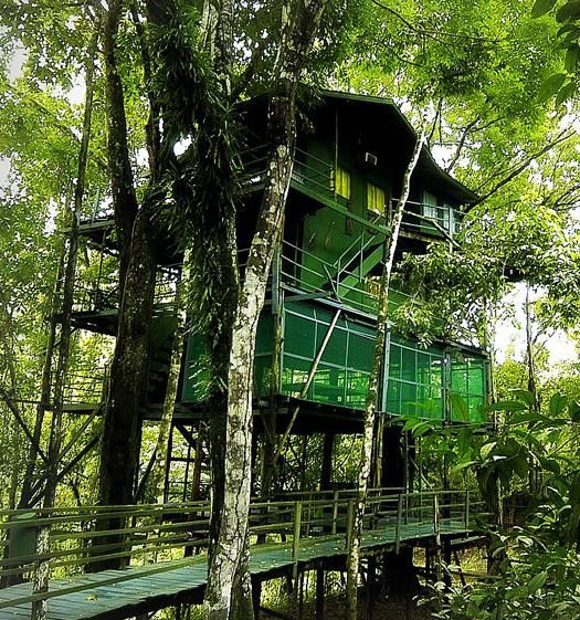 Stay in a tree house hotel 70 feet up in the Amazon jungle treetops
