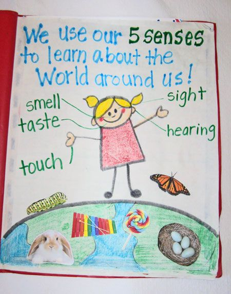 Five Senses Group Activity for Kindergarten through 1st Grade