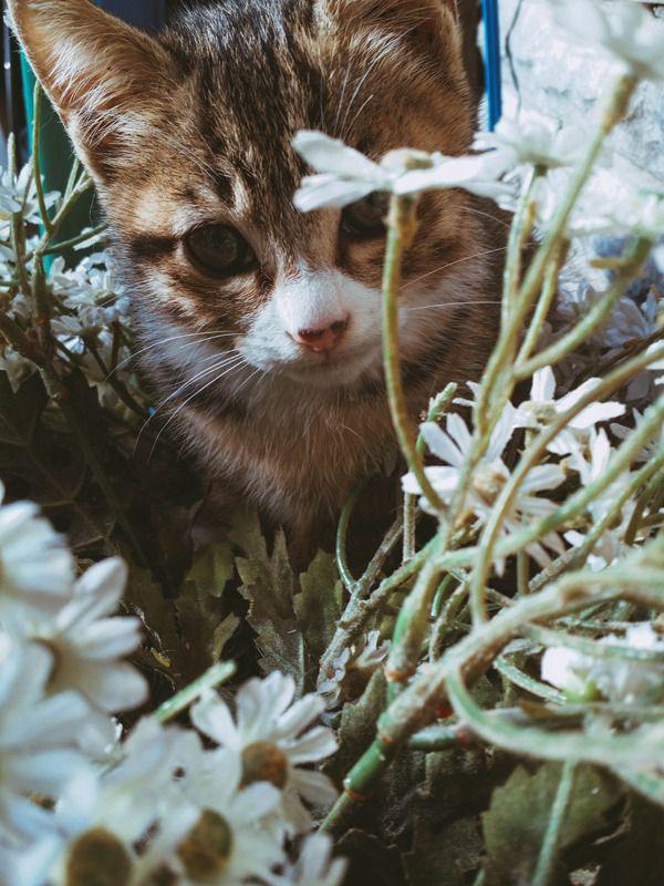 길냥이에서 마당냥이로 진화과정 입니다. (32장) | Daum 루리웹