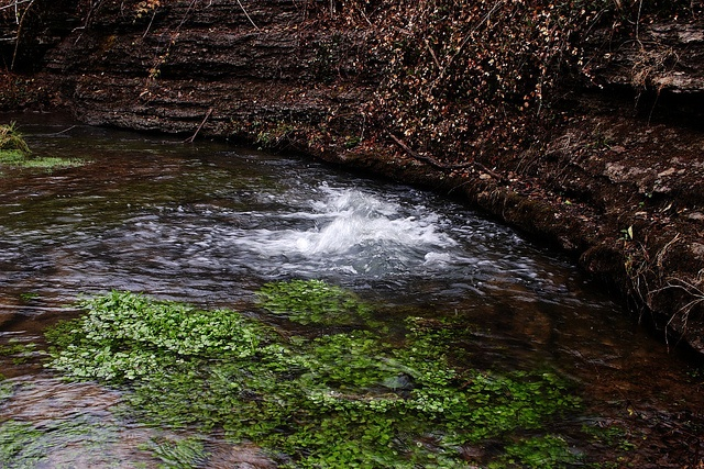 jefferson davis state historic site fairview