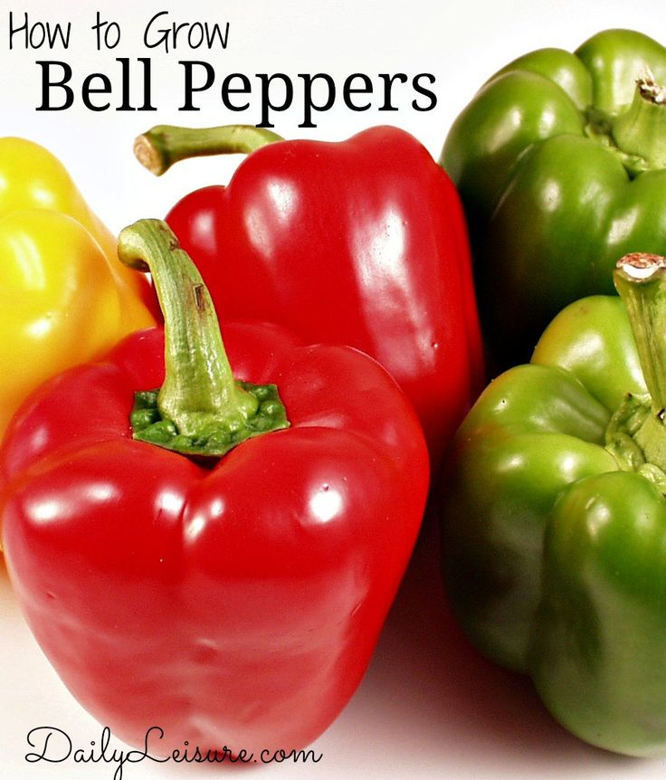 21 Best Images About Growing Bell Pepper Info On Pinterest