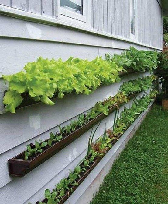 Simple way to grow your veg....   Leuk idee voor groenten verbouwen.
