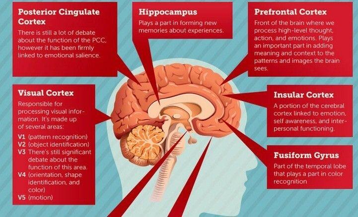 Infografía: Como relaciona tu cerebro los logos con la marca