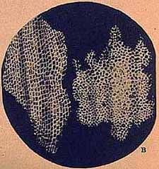The first cells seen down the first microscope in the late 1600s