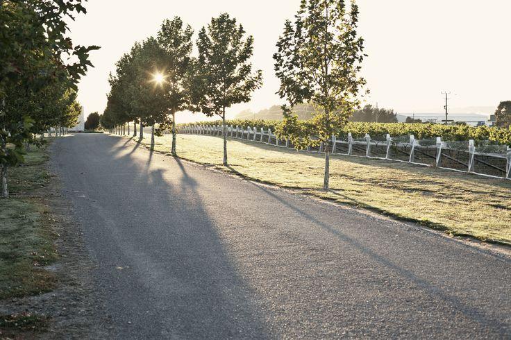 Winery Driveway