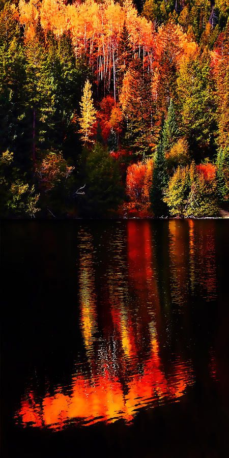 Lakeshore Reflections by Terril Heilman - Lakeshore Reflections Photograph - Lakeshore Reflections Fine Art Prints and Posters for Sale