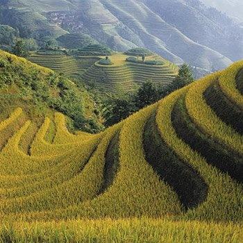 Bali; Indonesia - SUBAK, it was announced by UNESCO as Indonesian Heritage of Subak - padi field ...