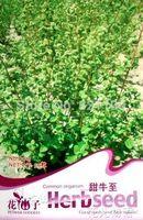 1 Pack 50 Seed chino de hierbas de semilla común Origanum Majorana semillas D013
