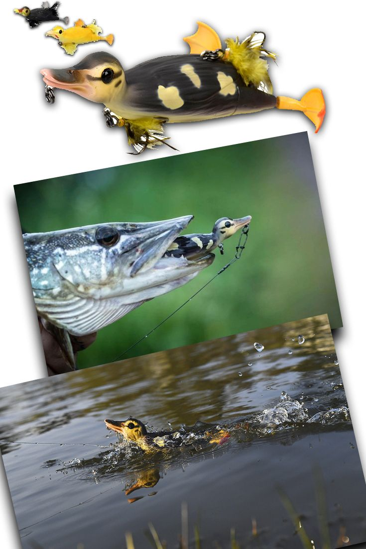1000 images about fishing lures on pinterest frogs for Duck fishing lure