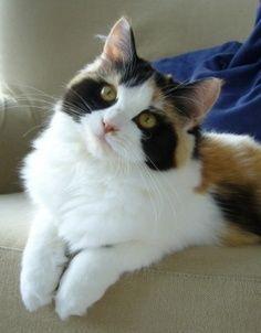 Cat With Raccoon Eye Marking Real