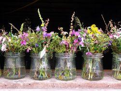 Sommerliche Leichtigkeit widerspiegeln grazile Wildblumen in ihrer unvergleichlichen Artenvielfalt.