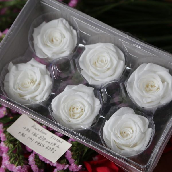 74 best wholesale preserved flowers images on Pinterest | Cut ...