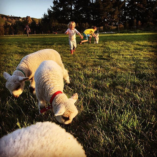 Kids and their pet lambs :)