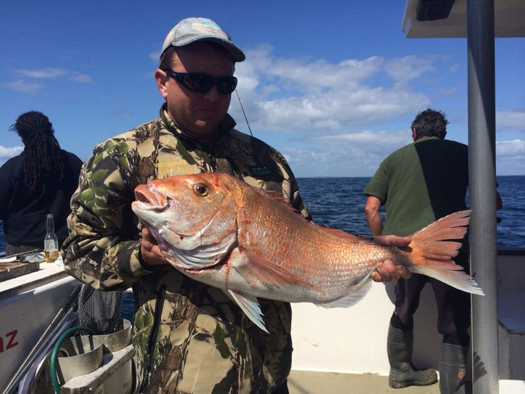 Big propellor on this fat snapper