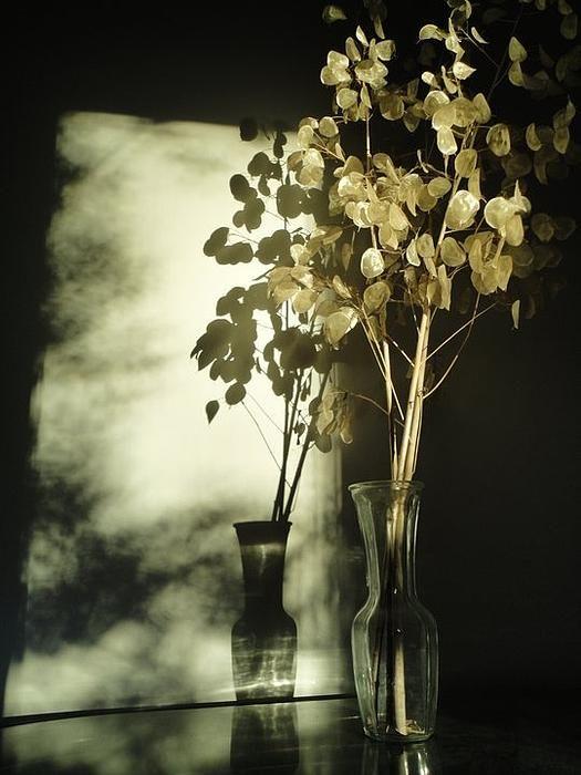 Money Plants Really Do Cast Shadows – Fine Art America